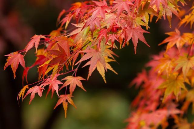 紅葉の季節です。全国の有名おすすめスポットをご紹介します!