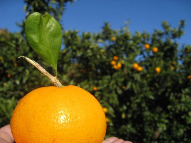 秋と言えば果物や野菜の美味しい季節です。旬のフルーツ狩り&野菜の収穫情報をお知らせします!<東京・神奈川編>